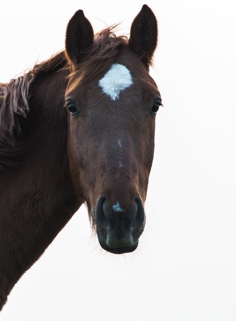 Eenzaam paard in avondlicht
