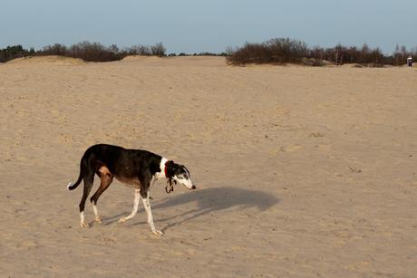Op de prairie?
