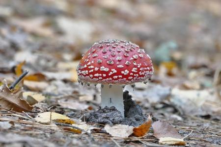 Vlieg zoekt mooi afdakje - - - foto door JanVanRossum op 26-12-2018 - deze foto bevat: paddestoel, herfst, bos, insect