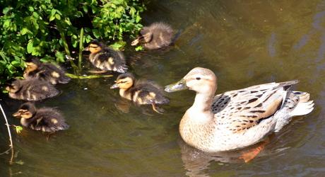 Voorjaar 2015 moeder en kinders uitgerust na koningsdag