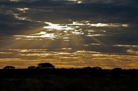 Kalahari sundown