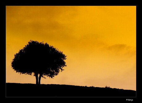Sunset behind the hill with the tree =)