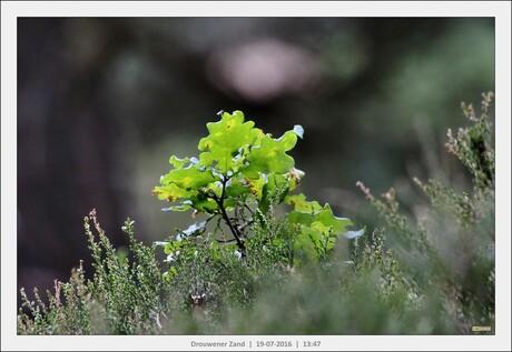 Helder groen in de zon