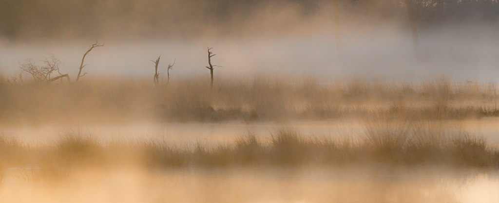 Strabrechtse Heide 237 - Gemaakt op een prachtige mistige morgen in April aan het Grafven. Een simpele compositie die vroeg om een panorama uitsnede waardoor de lagen nog mee - foto door Deshamer op 14-02-2016 - deze foto bevat: lucht, zon, water, panorama, lente, natuur, licht, landschap, mist, heide, bos, brabant, tegenlicht, zonsopkomst, bomen, silhouet, nederland, mysterieus, lagen, laagjes, grafven, Strabrechtse heide