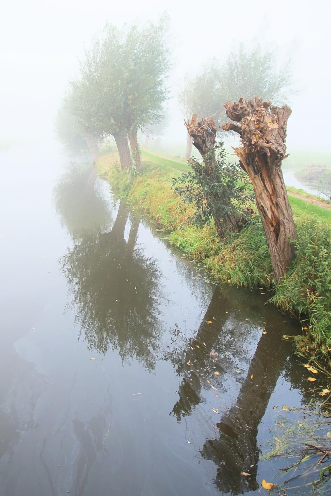 mist 2338 - - - foto door onne1954 op 27-10-2020 - deze foto bevat: groen, lucht, boom, water, natuur, geel, licht, herfst, blad, landschap, mist, nederland