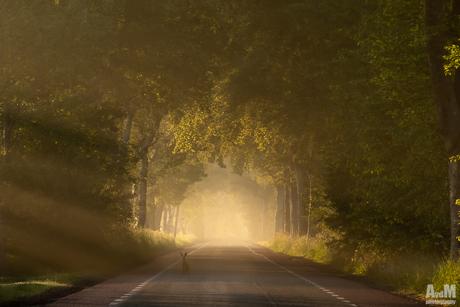 Haasje in het licht