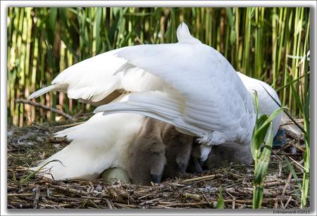 _MG_5848kdr kl - Effe warmen - foto door gerardcor op 16-12-2015 - deze foto bevat: reiger, voorjaar, watervogel, 2015