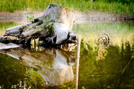 Dood hout in stilstaand water