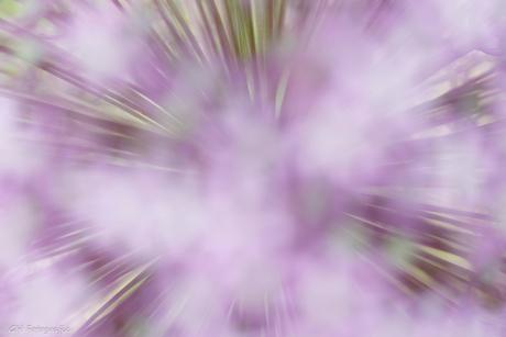 Bloemenstralen