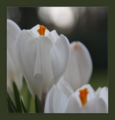 De lente is er......