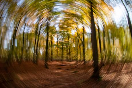 Spinning Autumn