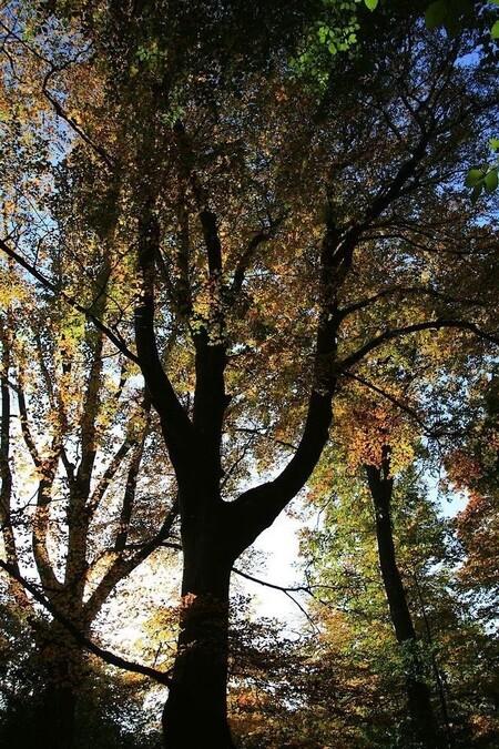 Dickninge 1 - De zon achter de boom gedaan en tegen het licht in gefotografeerd..  gr jenny en allen bedankt voor de reactie,s en favo,s.... - foto door jenny42 op 02-11-2016 - deze foto bevat: groen, lucht, zon, boom, bladeren, natuur, geel, licht, herfst, blad, bos, tegenlicht, takken, nederland, dickninge, jenny42., de Wijk