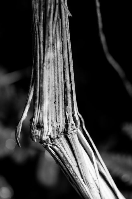 The bare bones