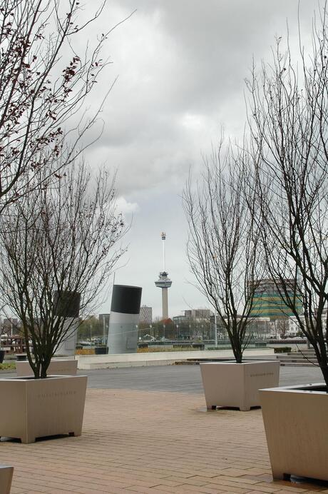 zicht op Rotterdam.
