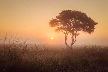 De savanne van Nederland.