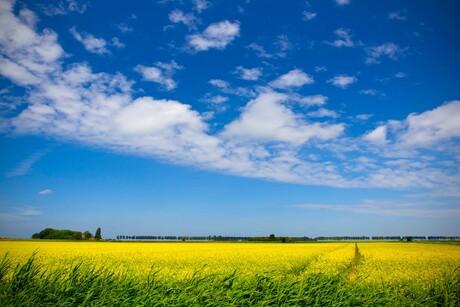 Landschap Dirksland e.o.