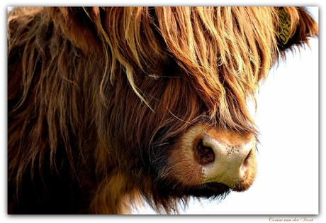 Schots en scheef die pony..:)