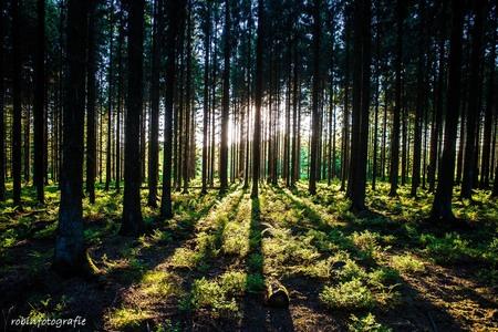 Forrest shadows - Ik ben niet zo thuis in het fotograferen van natuurachtige zaken maar dit wilde ik toch fotograferen en natuurlijk hier delen ;) - foto door robinvanbergen op 31-05-2017 - deze foto bevat: zon, boom, licht, bos, zomer