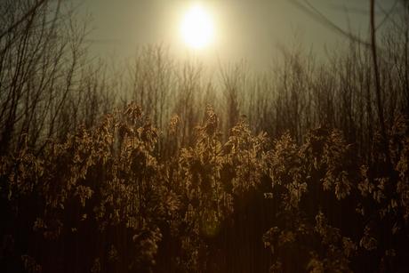 Alway's the sun