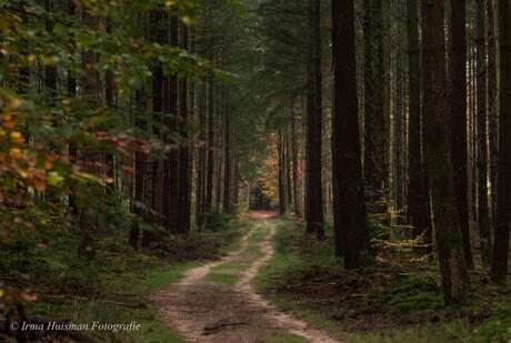 Bos met de Dansende Bomen- 31-10-2020 222