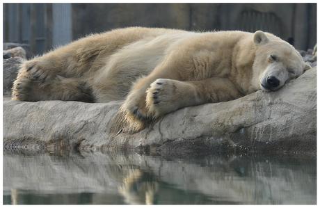 Let sleeping bears sleep..