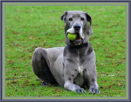 Leg neer die bal!!!!!!!!