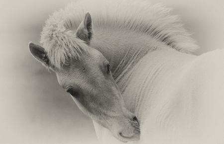 paardje 4934 - - - foto door onne1954 op 28-06-2018 - deze foto bevat: natuur, paard, dieren