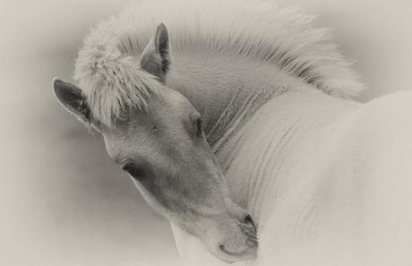 paardje 4934