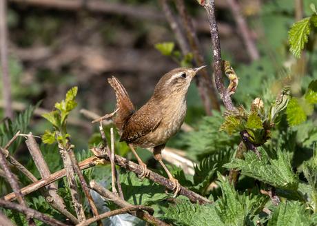 bruin vogeltje