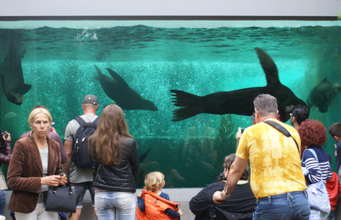 De aapjes kijken naar de zeeleeuwen - - - foto door MarijeScheening op 15-08-2017 - deze foto bevat: man, mensen, amsterdam, water, dierentuin, licht, reflectie, schaduw, zeeleeuw, meisje, zeehond, beweging
