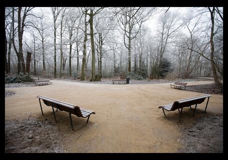 Winter in de Haarlemmerhout