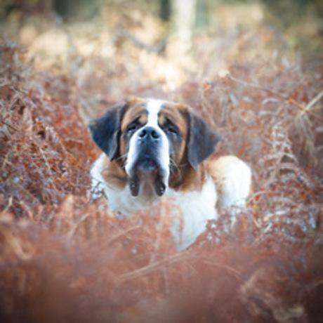 prins bernard hond (1 van 1)
