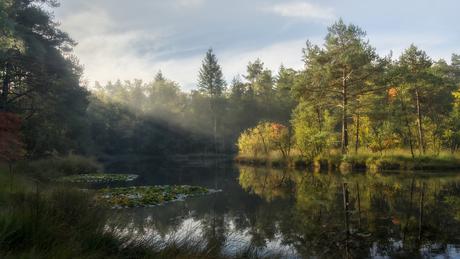 Rays of autumn