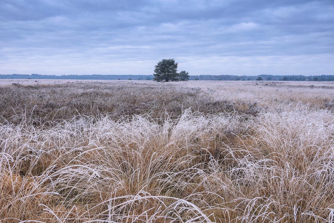 Heideveld ochtend - Een frisse ochtend op een heideveld bij Speuld. (07-03-2021) - foto door henrivanarkel op 07-03-2021 - deze foto bevat: lucht, licht, rijp, winter, heide, bomen, heideveld