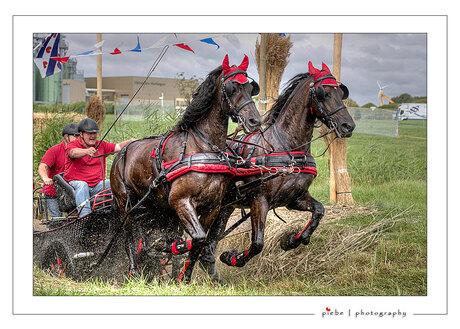 Paardenmarathon Harlingen 1
