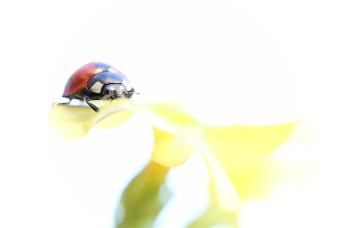 Lente - - - foto door Cheese_zoom op 28-02-2021