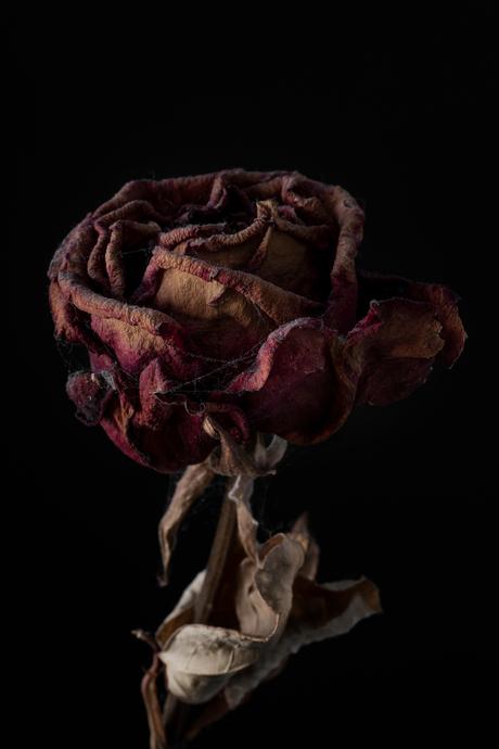 Vergaande roos