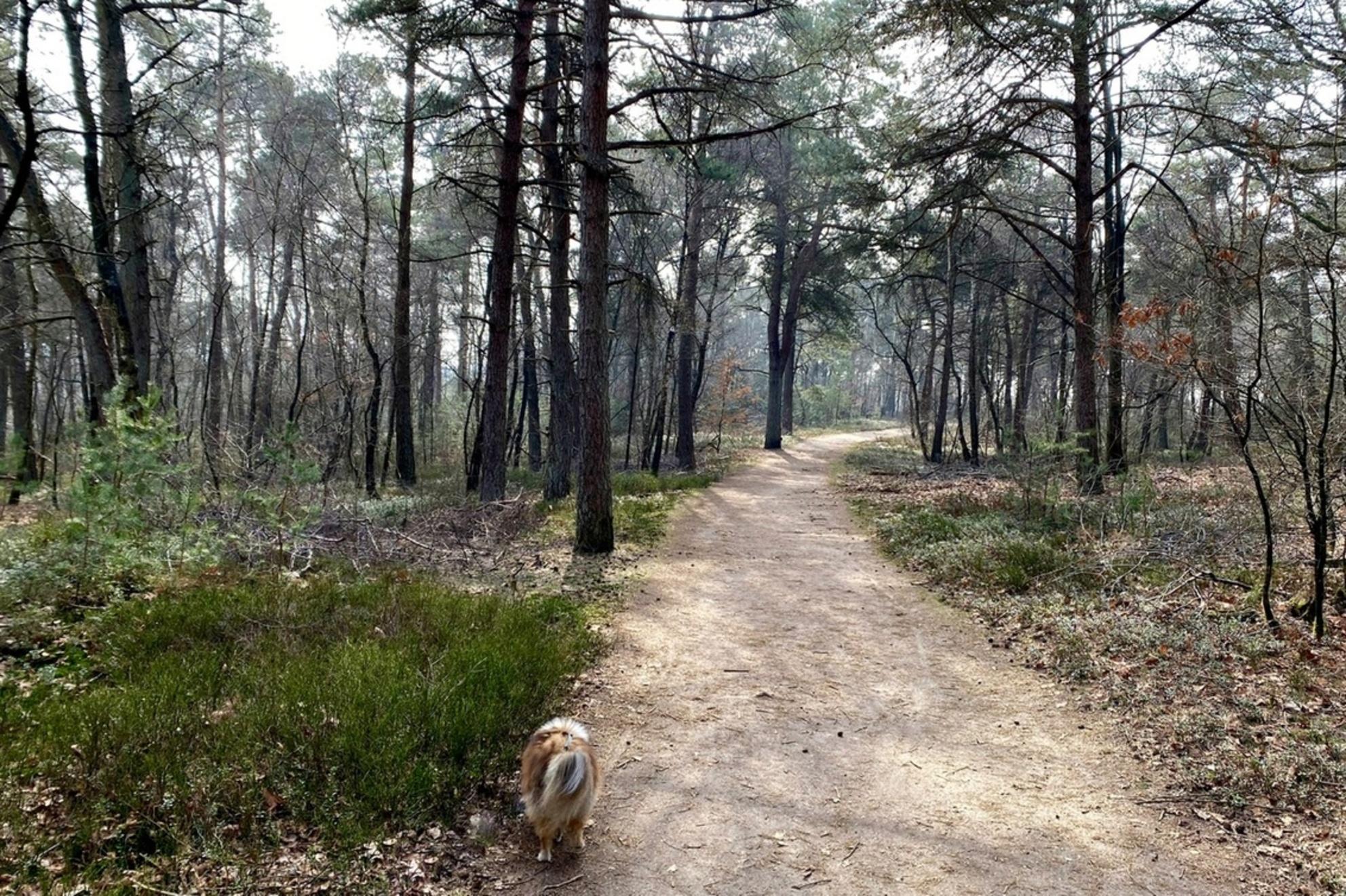 Mysterieus bos - Ik werd getrokken door het contrast tussen de donkere bomen en de hele lichte felle lucht. - foto door HeidiCM op 03-03-2021 - deze foto bevat: winter, landschap, bos, tegenlicht, bomen