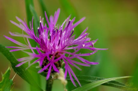 wildflower 11