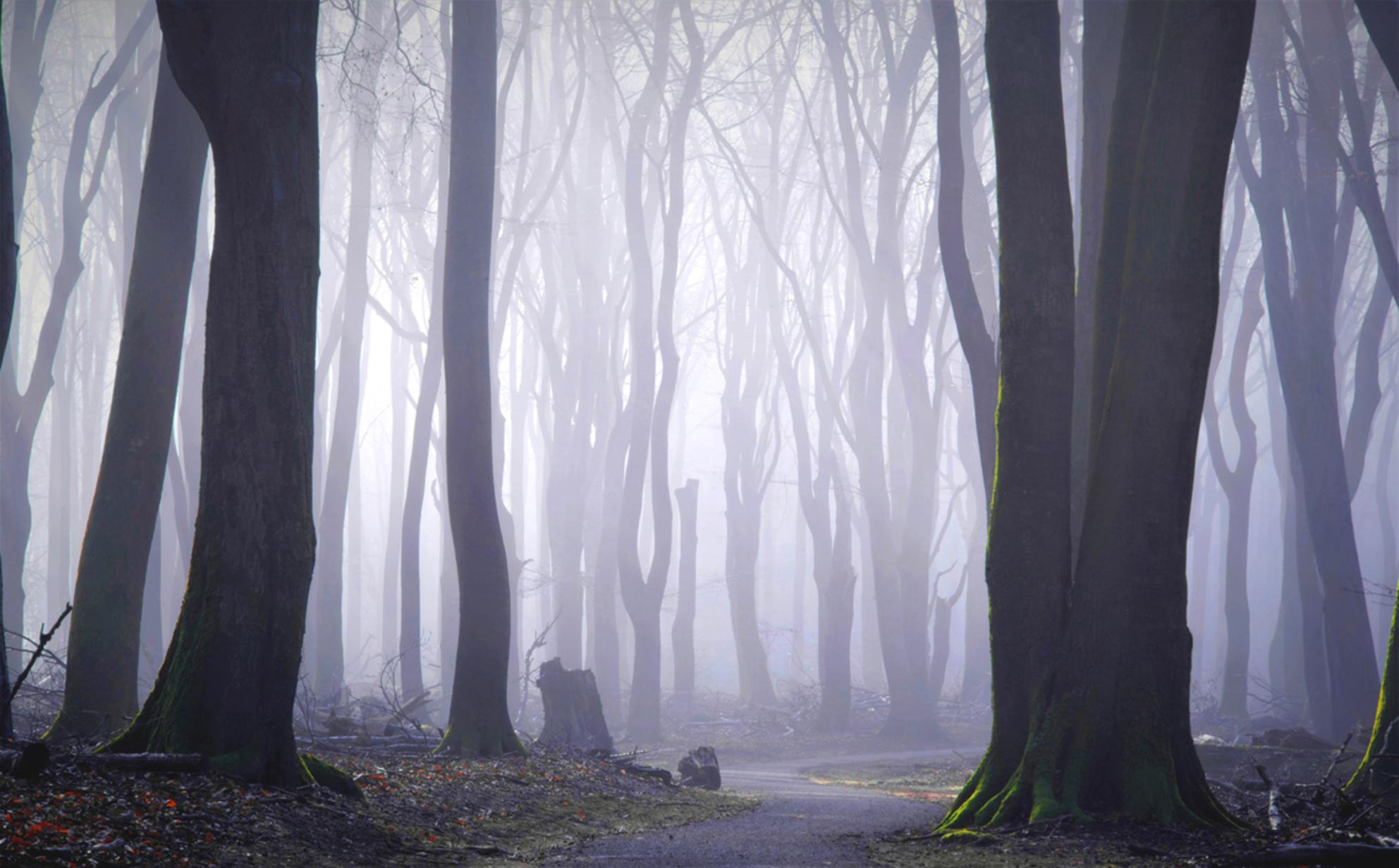 Het stille bos - Helemaal aan de rand van het grote bos kwam ik hier uit. Misschien had ik meer pad kunnen meepakken, maar misschien kreeg ik dan ook meer losse takke - foto door pslagmolen op 02-03-2021 - deze foto bevat: panorama, natuur, veluwe, landschap, mist, bos, zonsopkomst, bomen, nederland, speulderbos, lange sluitertijd - Deze foto mag gebruikt worden in een Zoom.nl publicatie