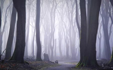 Het stille bos - Helemaal aan de rand van het grote bos kwam ik hier uit. Misschien had ik meer pad kunnen meepakken, maar misschien kreeg ik dan ook meer losse takke - foto door pslagmolen op 02-03-2021 - deze foto bevat: panorama, natuur, veluwe, landschap, mist, bos, zonsopkomst, bomen, nederland, speulderbos, lange sluitertijd