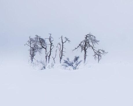 De verbrande bomen