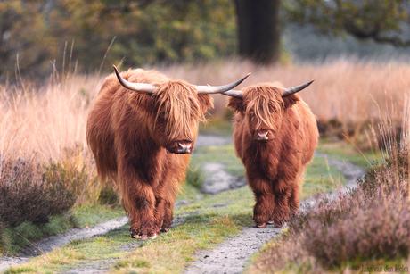 Two Highlanders