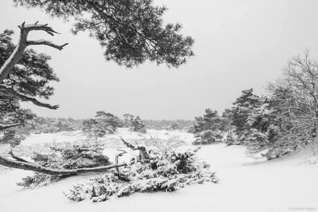 Winterwonderland 2...