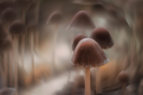 Fairytale forest 3
