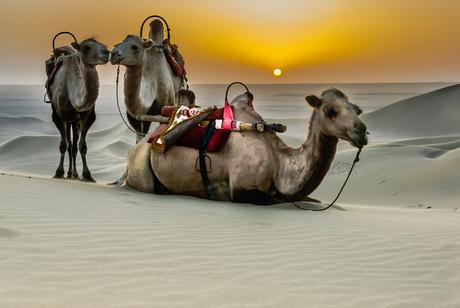 Desert taxi