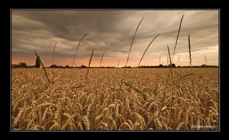 Zonsondergang over een Achterhoeks korenveld