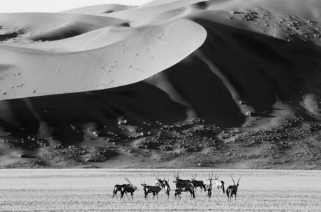 Oryx & Dunes