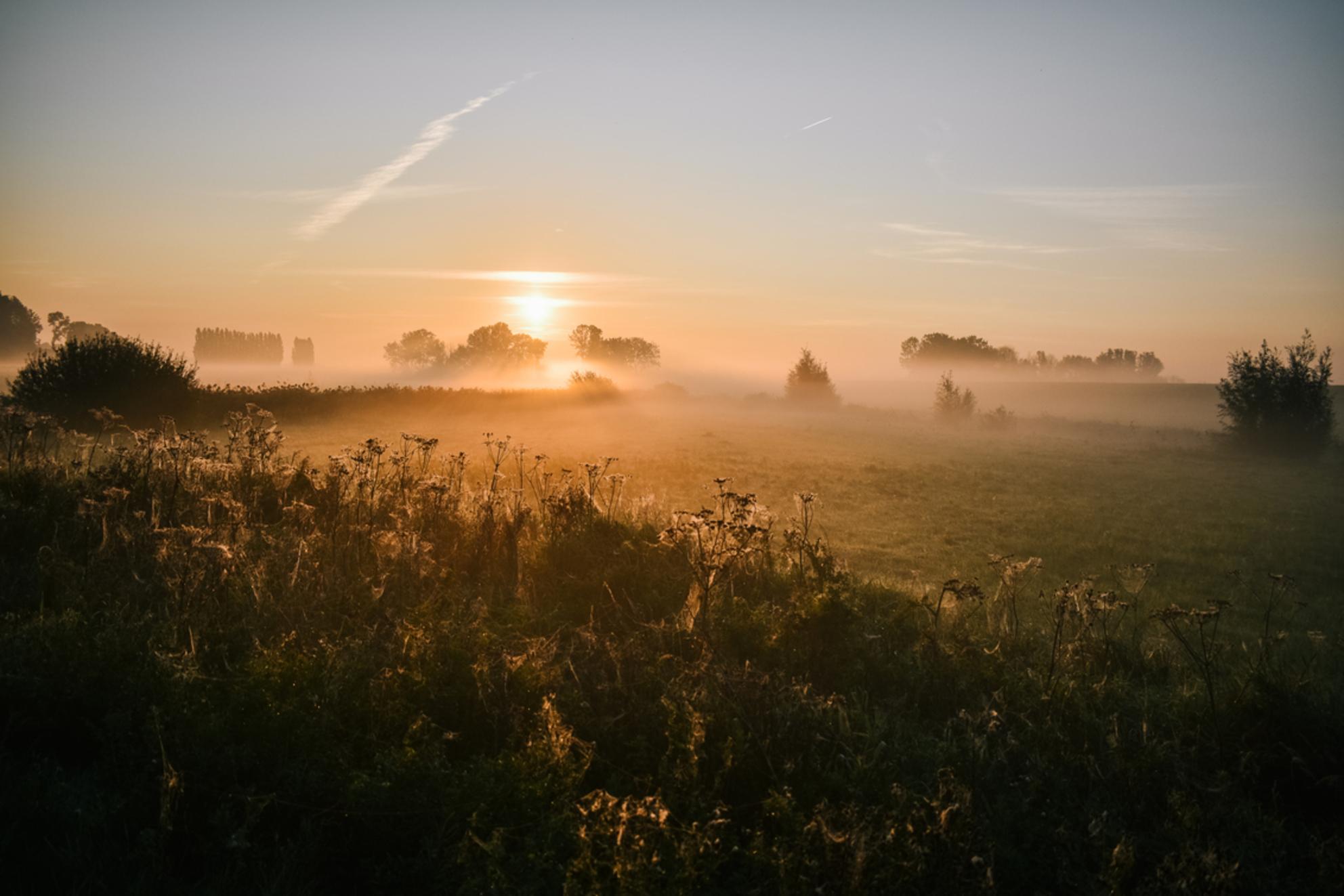 Zonsopkomst mistig platteland - - - foto door jiscalucia op 28-02-2021 - deze foto bevat: lucht, natuur, platteland, licht, herfst, landschap, mist, zonsopkomst, mistig, landelijk, Gouden uurtje