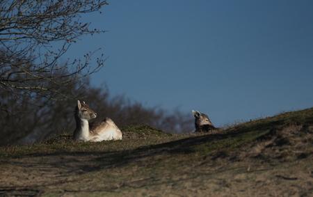 Teder... - Een mooi stukje natuur ... In het AWD - foto door pietsnoeier op 10-02-2018 - deze foto bevat: natuur, hert, awd, wildlife, teder